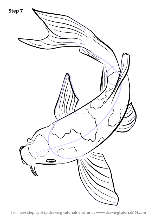 596x842 Step by Step How to Draw a Koi Fish