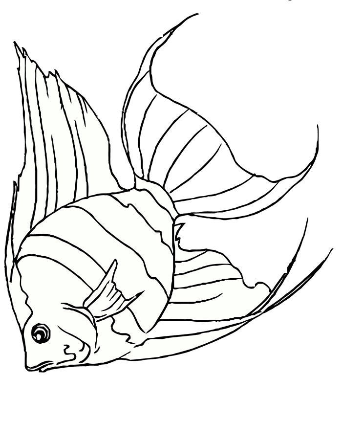 700x906 Drawn Fish Outline Drawing