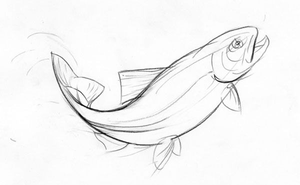 Fish Drawing In Pencil