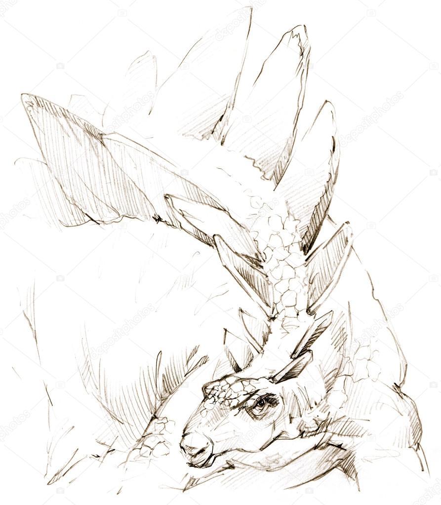 893x1023 Dinosaur. Dinosaur Drawing Pencil Sketch Stock Photo