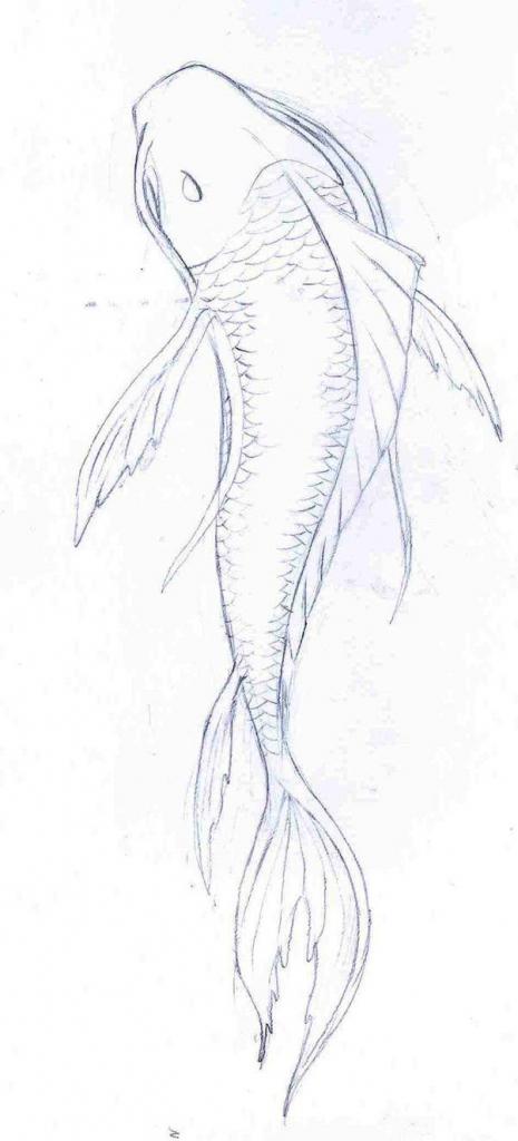 465x1024 Pencil Drawings Fish