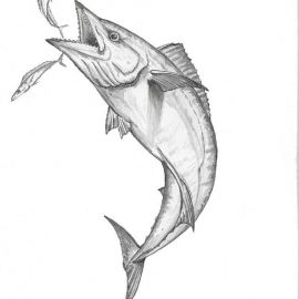 270x270 Pencils Salt Water Game Fish Paintings By