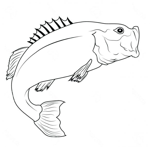 618x606 Coloring Fascinating Fish Outline Drawing. Tropical Fish Outline