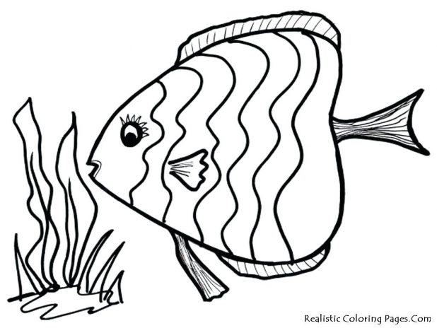 618x464 Coloring Remarkable Outline Of A Fish. Outline Images Of Starfish