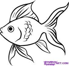 Fish Drawing Simple