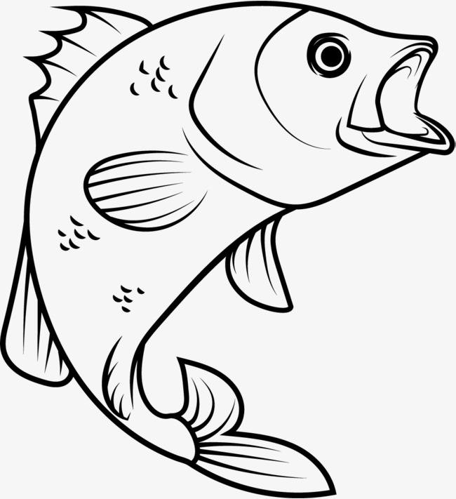 650x711 Big Mouth Fish, The Fish Out Of The Water, Jumping Fish, Jump Out