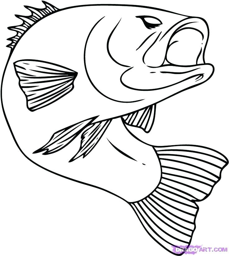 736x823 Outline Of Fish To Color Pin Drawn Drawing 2