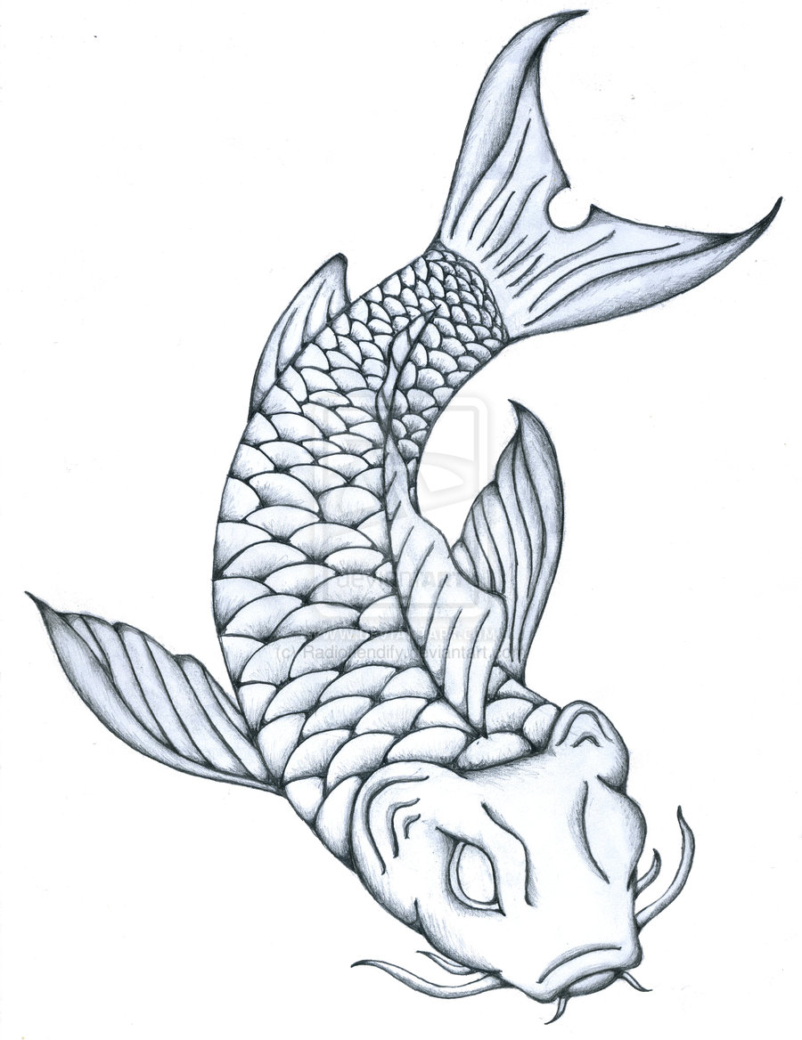 Fish Pencil Drawing at GetDrawings   Free download