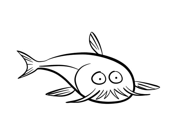 600x464 Pencil Sketch Catfish Coloring Pages Best Place To Color