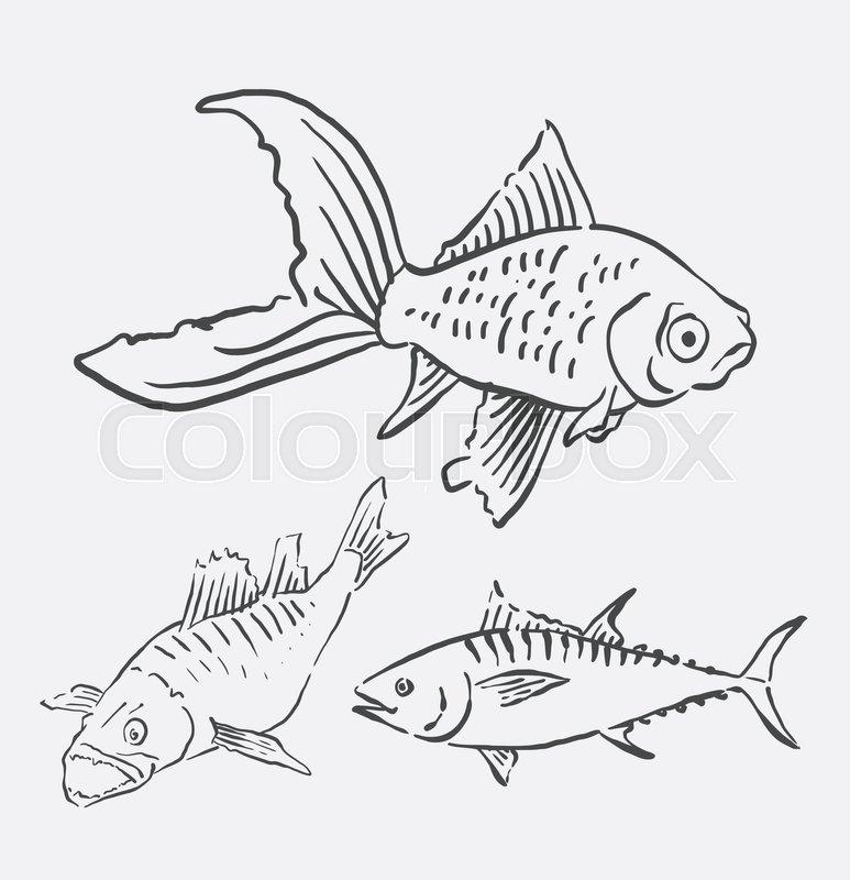 773x800 Fish Pet Animal Sketch. Good Use For Symbol, Logo, Web Icon