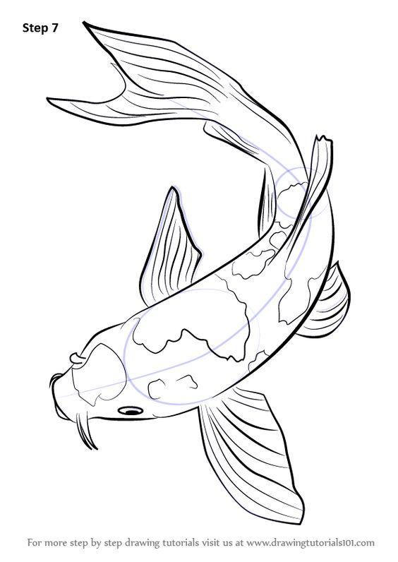 564x796 Koi Fish Belongs Tot He C. Carpio Specie. In This Tutorial, We