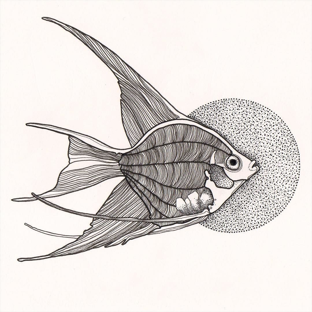 1080x1080 Andrew Mccallum Angel Fish. First Draw Of 2016. Quick Small One .