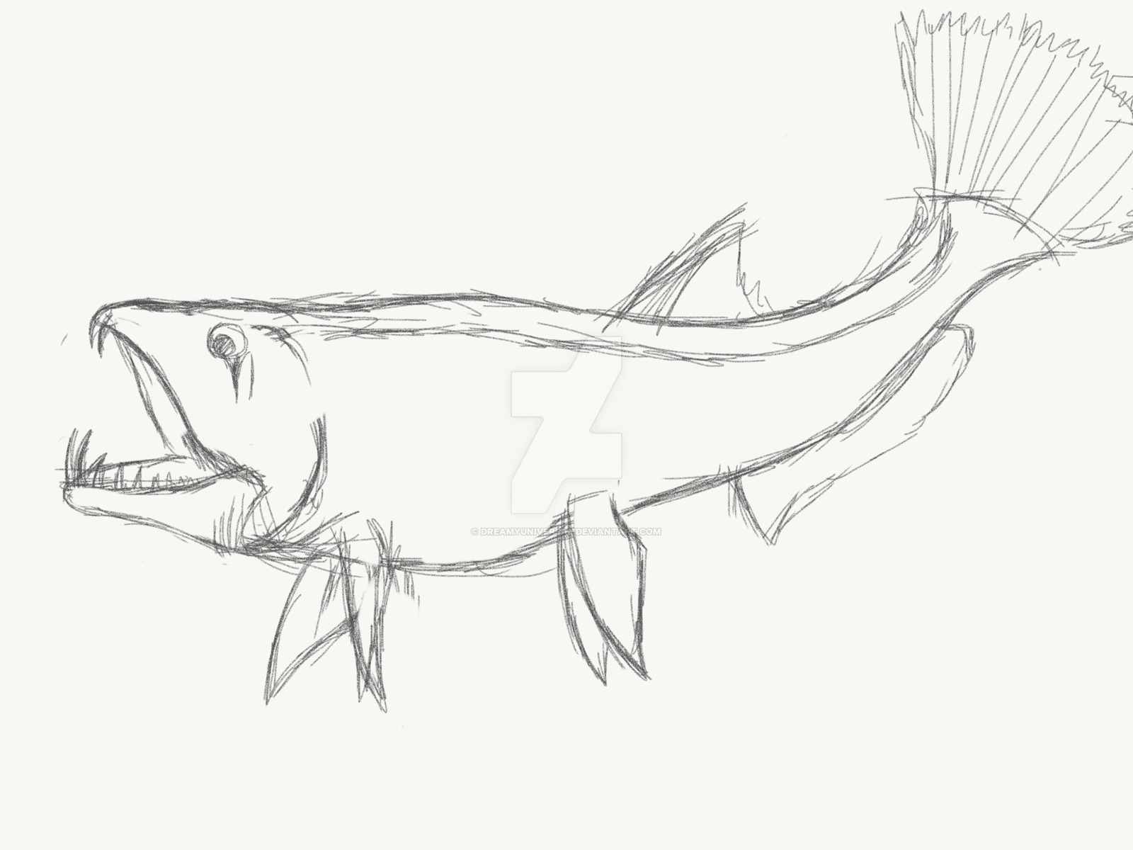 1600x1200 Tries To Sketch My Favourite Fish By Dreamyuniversal