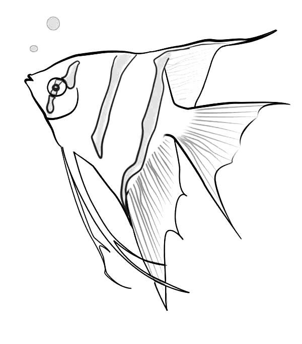 600x685 Bonanza Angel Fish Coloring Page Sketch Sky
