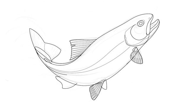 600x370 Drawing Of A Jumping Trout On Behance