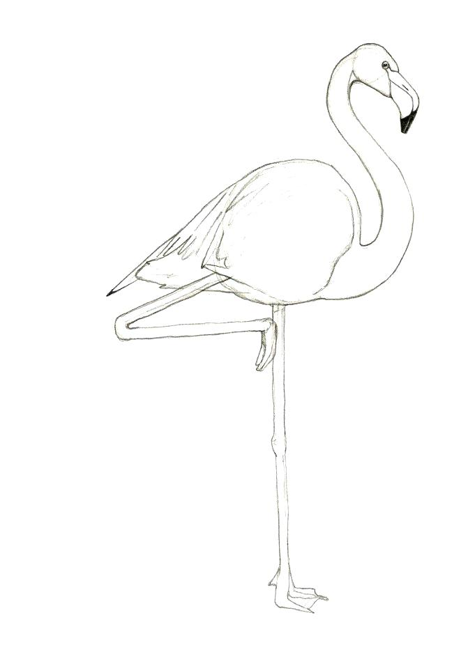 671x949 Flamingo Coloring Pages Alphabet F Coloring Page Flamingo Coloring