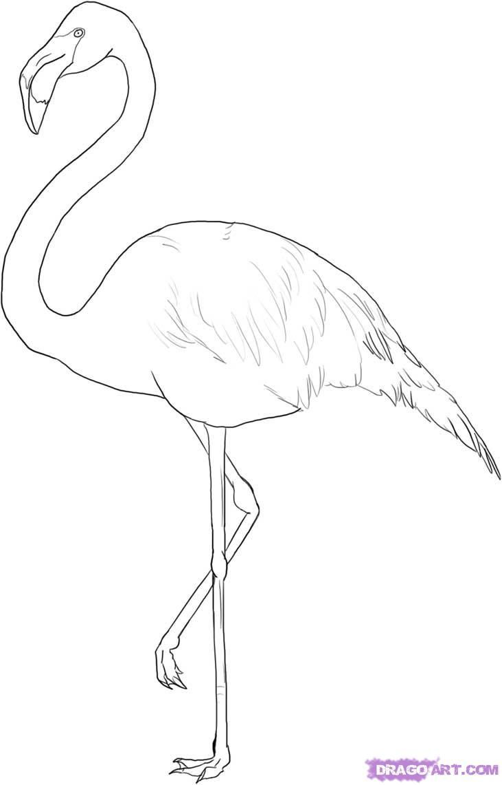 Flamingo Drawing Outline