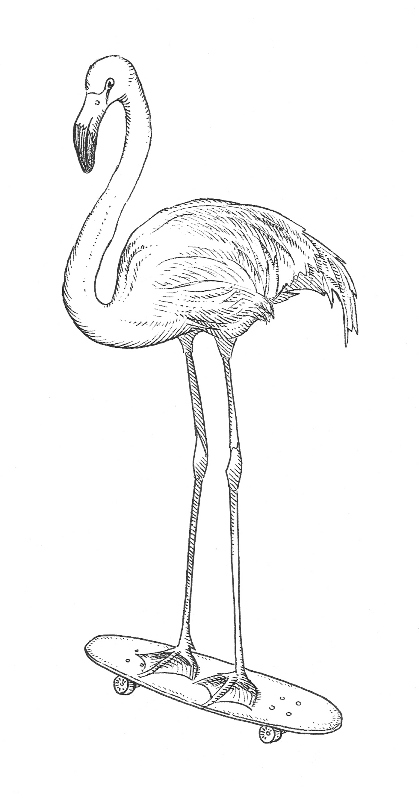 Flamingo Drawing Outline at GetDrawingscom Free for personal use