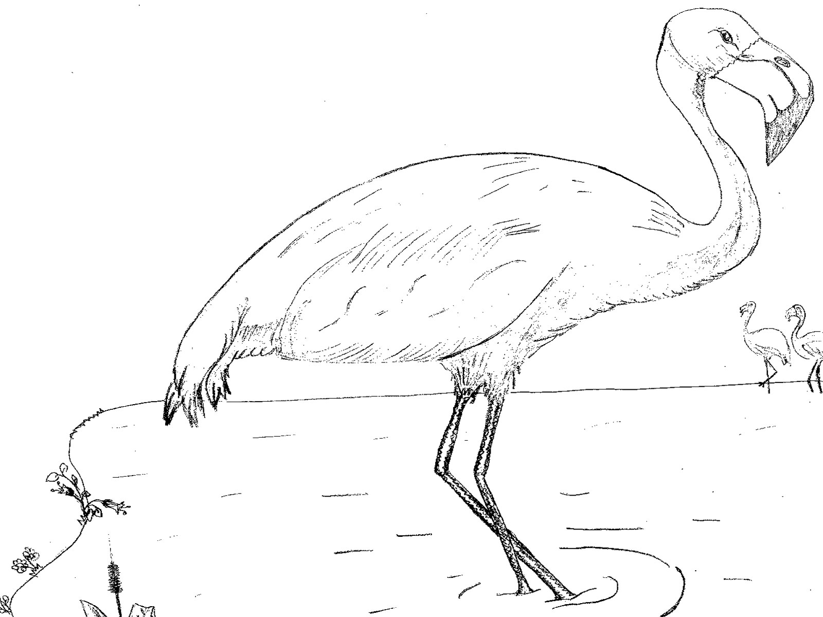 Flamingo Drawing Template At Getdrawings Com Free For