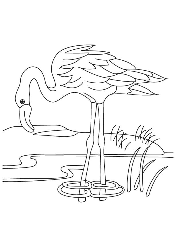 Flamingo Drawing Template At Getdrawings Com Free For Personal Use