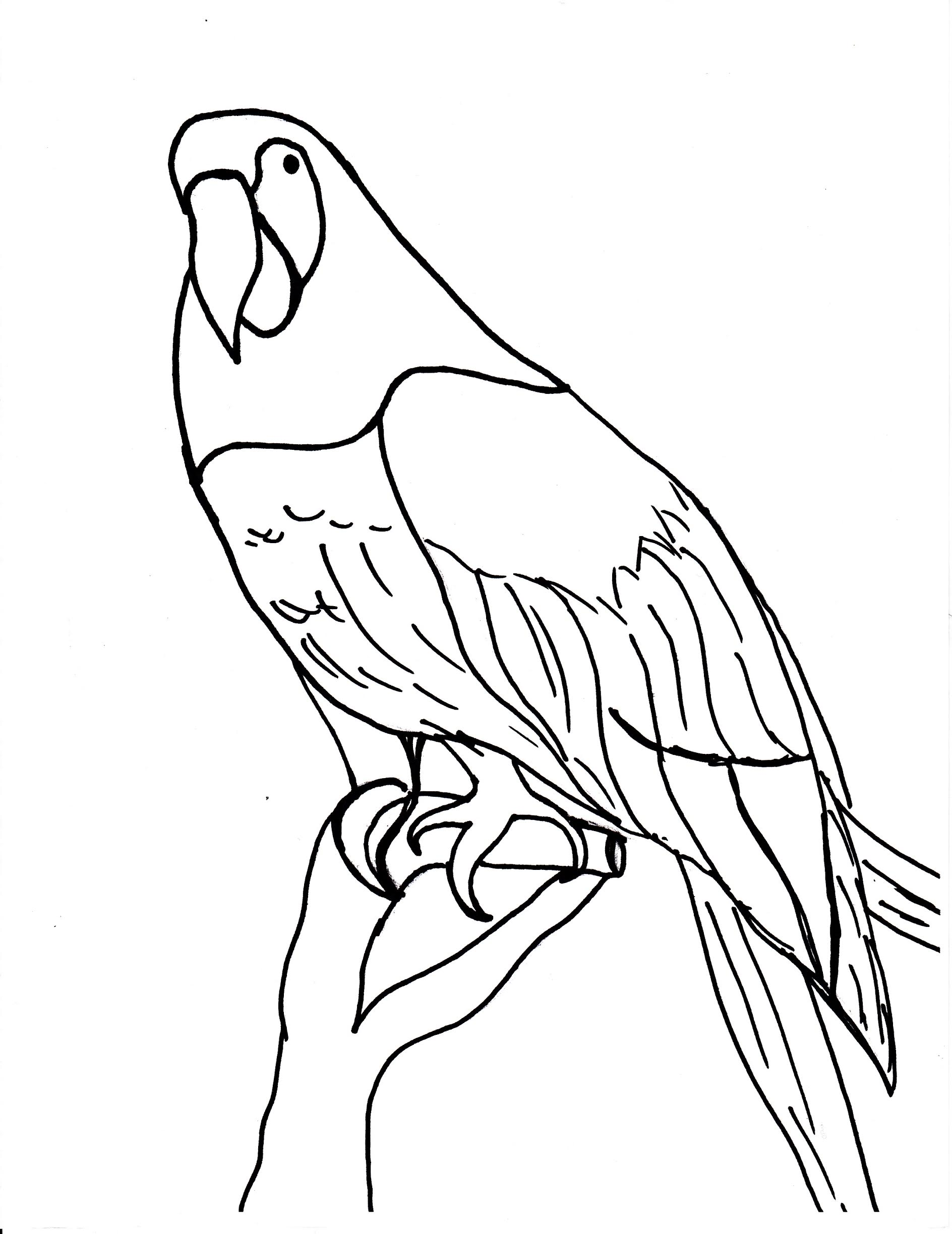 Flamingo drawing template at free for for Flamingo beak template
