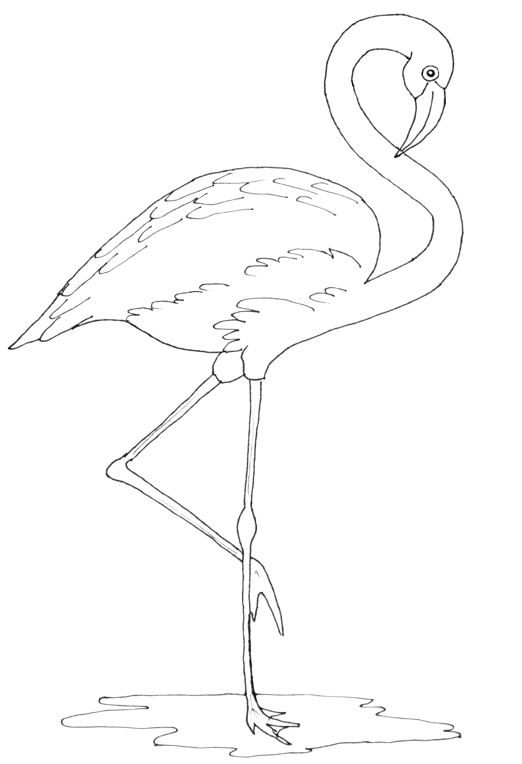 photograph relating to Printable Flamingo Template identify Flamingo Line Drawing at  Cost-free for person