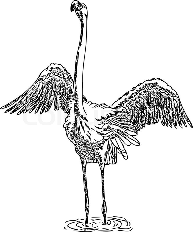 Flamingo Line Drawing At Getdrawings Com Free For Personal Use