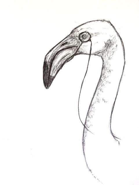 Flamingos Drawing