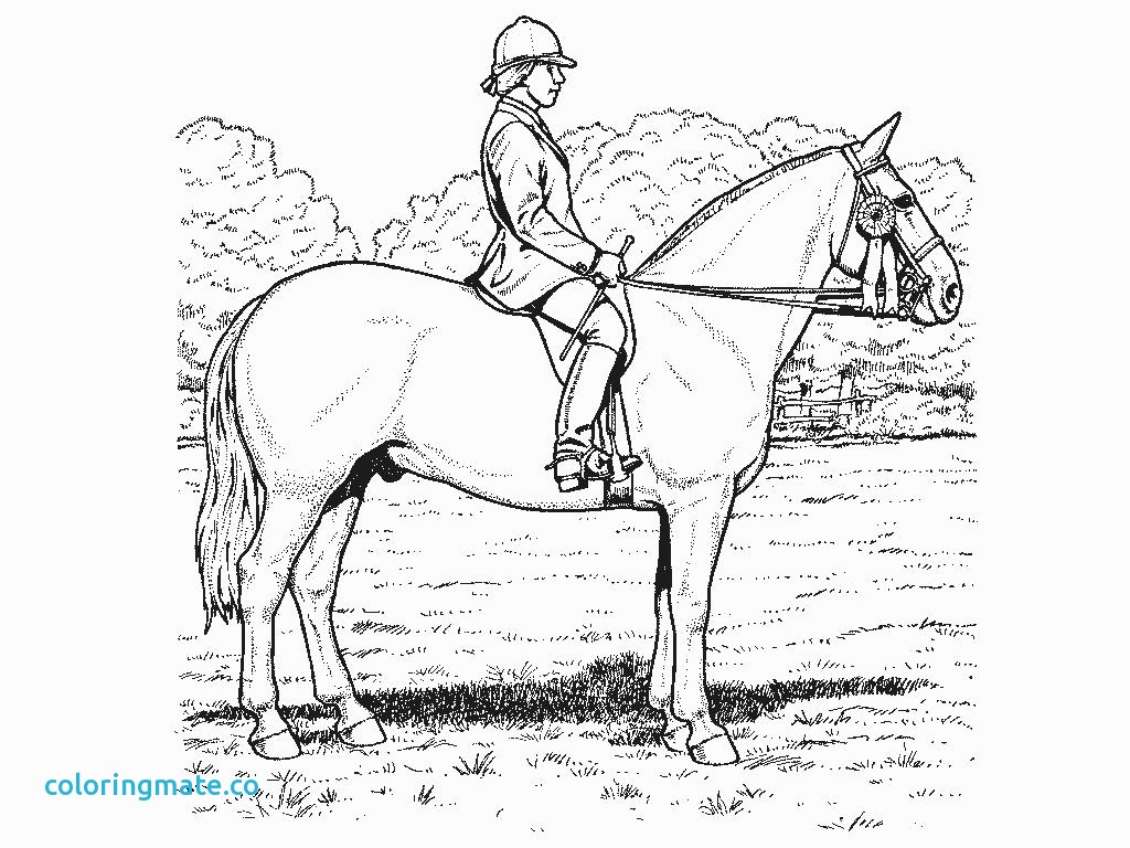 1024x768 Realistic Horse Coloring Pages Lovely Flat Stanley Friends Gekimoe