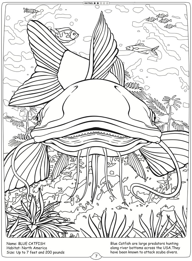 650x882 Image Result For Grayscale Coloring Page Flathead Catfish Adult