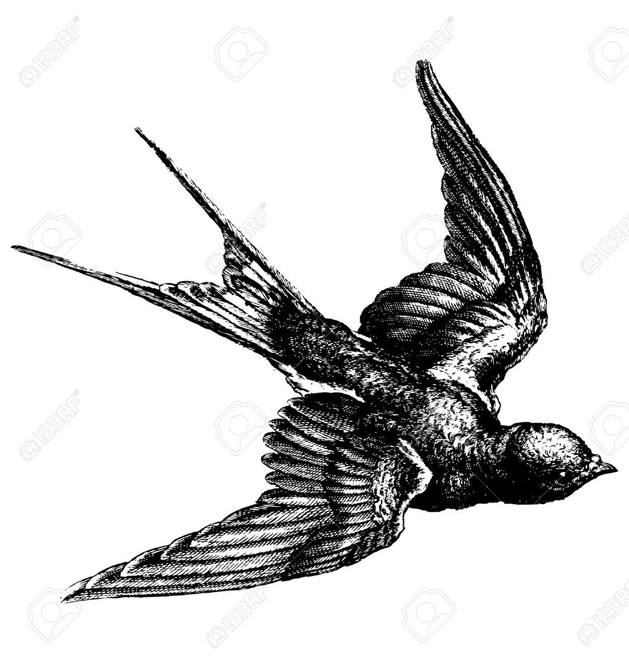 Flock Of Birds Drawing