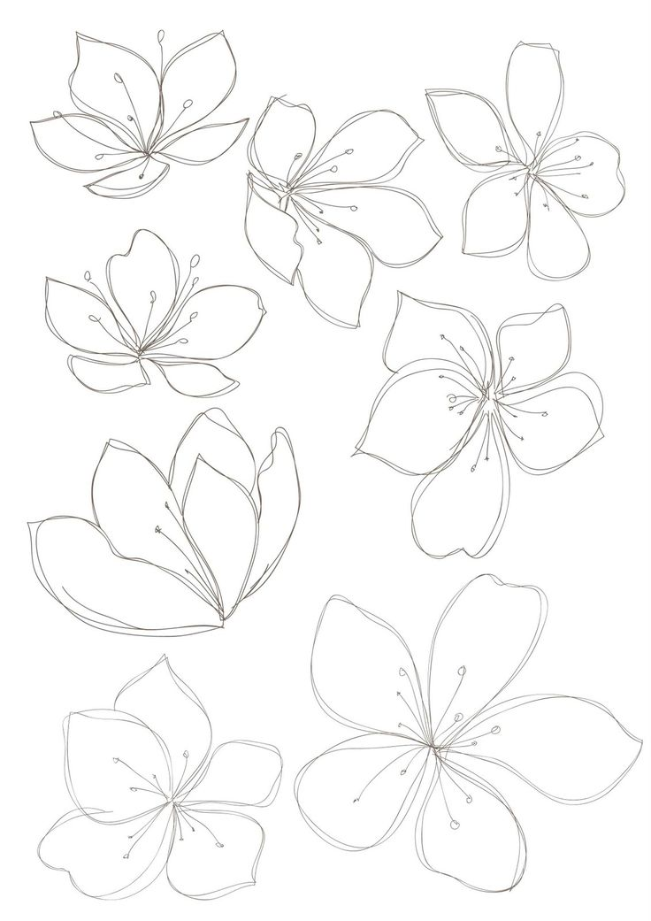 736x1041 Floral Drawings