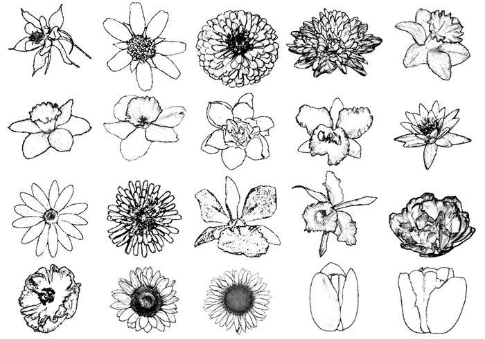 700x490 Ink Drawing Flower Brushes Free Photoshop Brushes