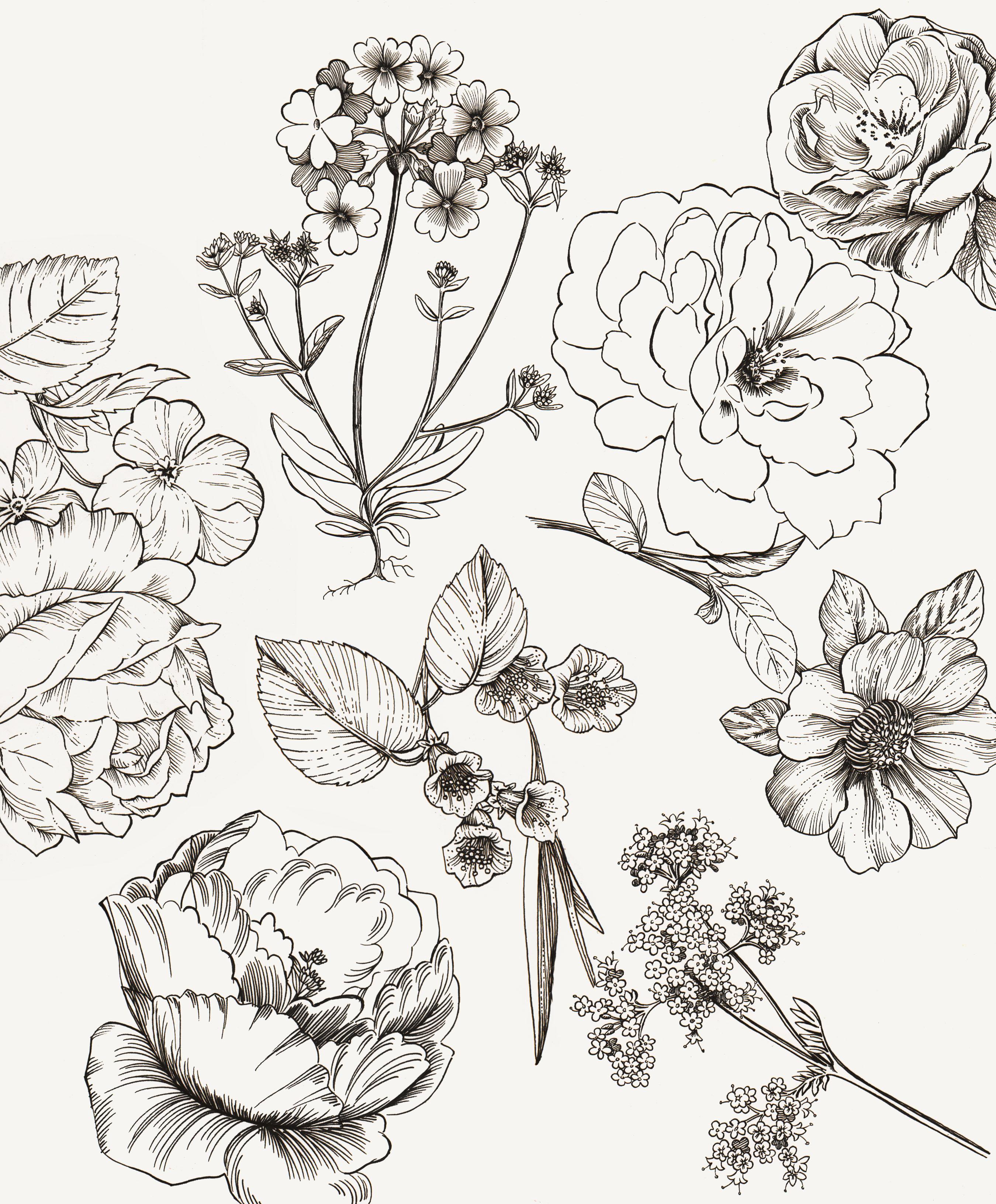 2700x3265 Malorie Dix Drawings
