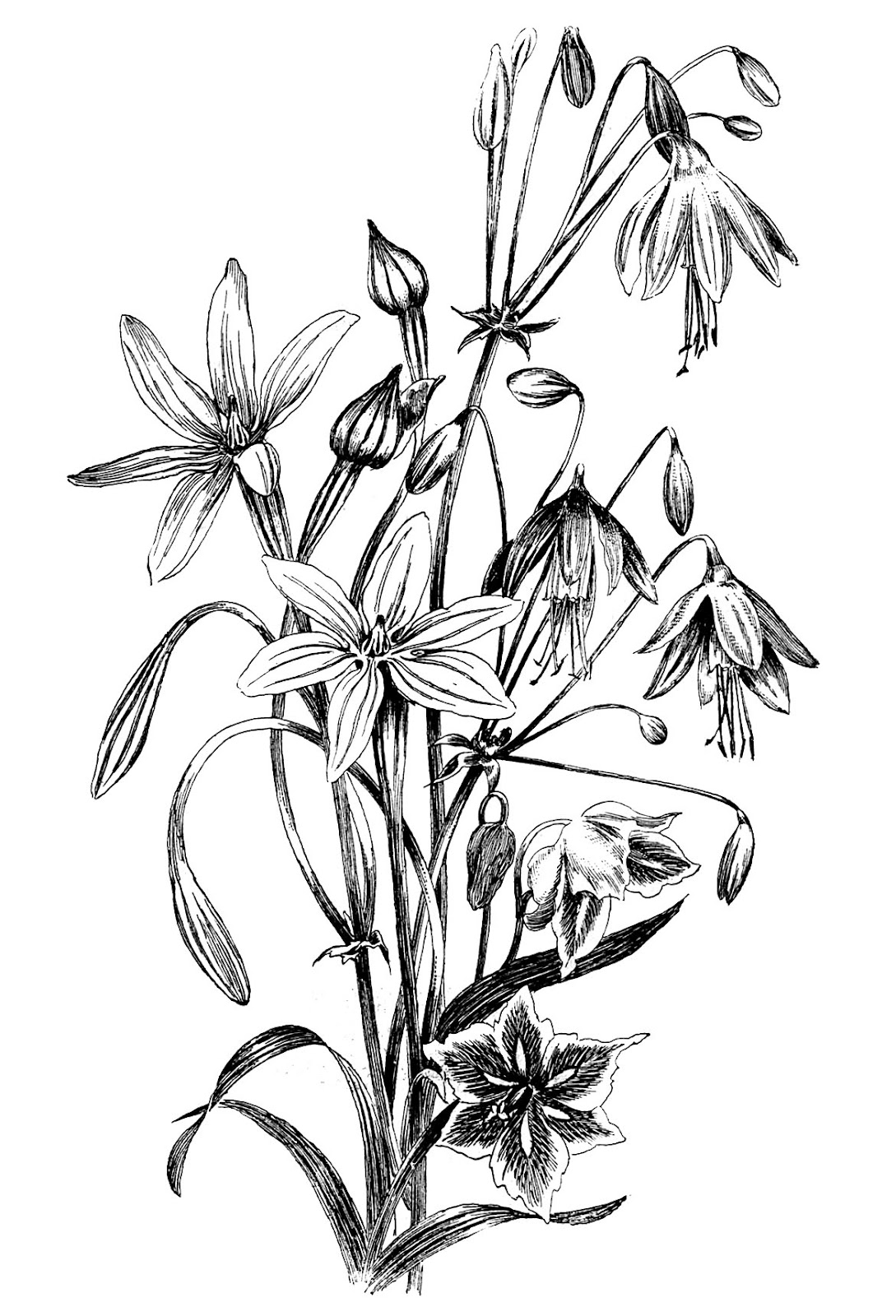 1089x1600 Black And White Floral Drawing