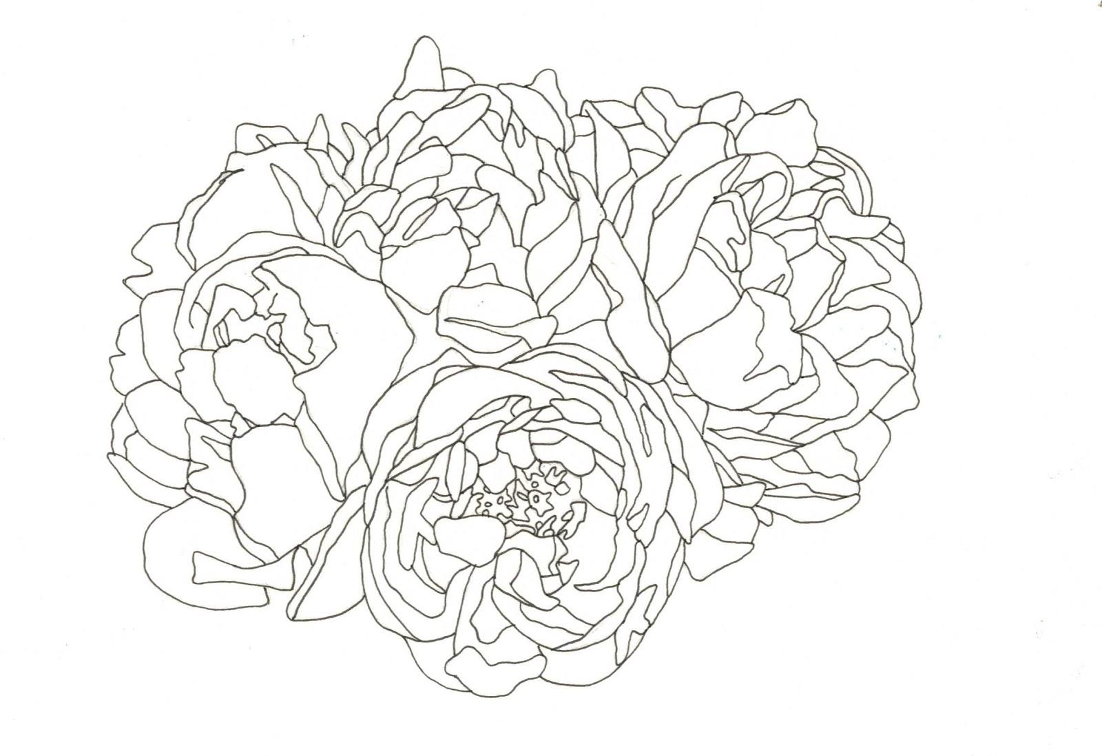 1600x1098 Sophie Brabbins Floral Drawing