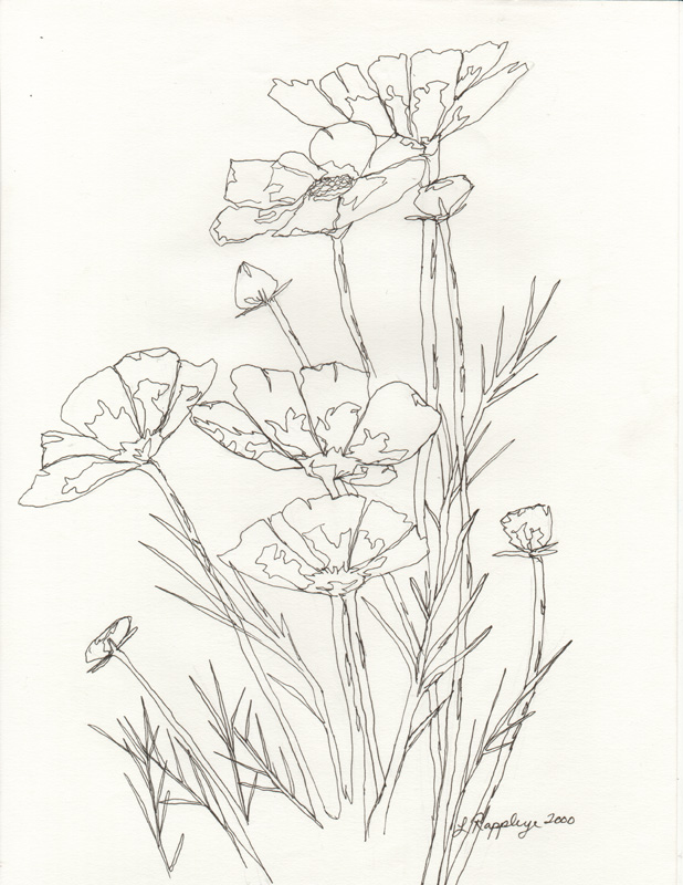618x800 Flower Line Drawing By Butterflylr