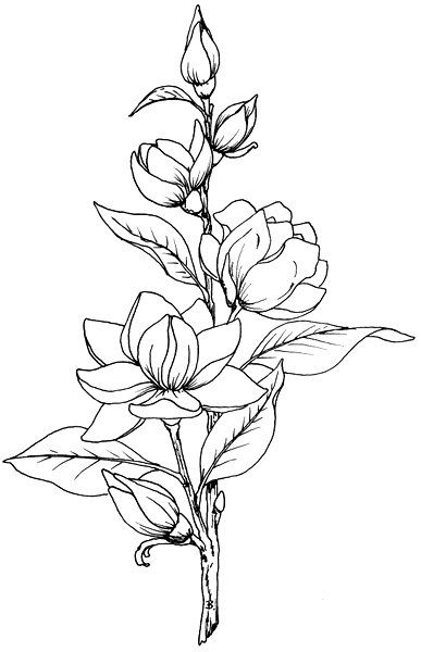 387x600 Beccy's Place Magnolia Magnolia, Drawings