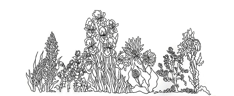 800x331 Stylized Floral Line Drawing Mugs By Hidinart Redbubble