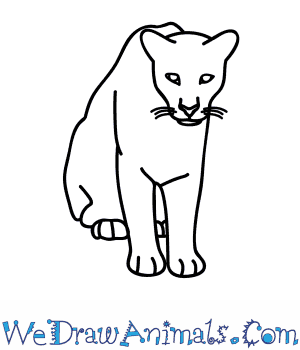 300x350 How To Draw A Florida Panther