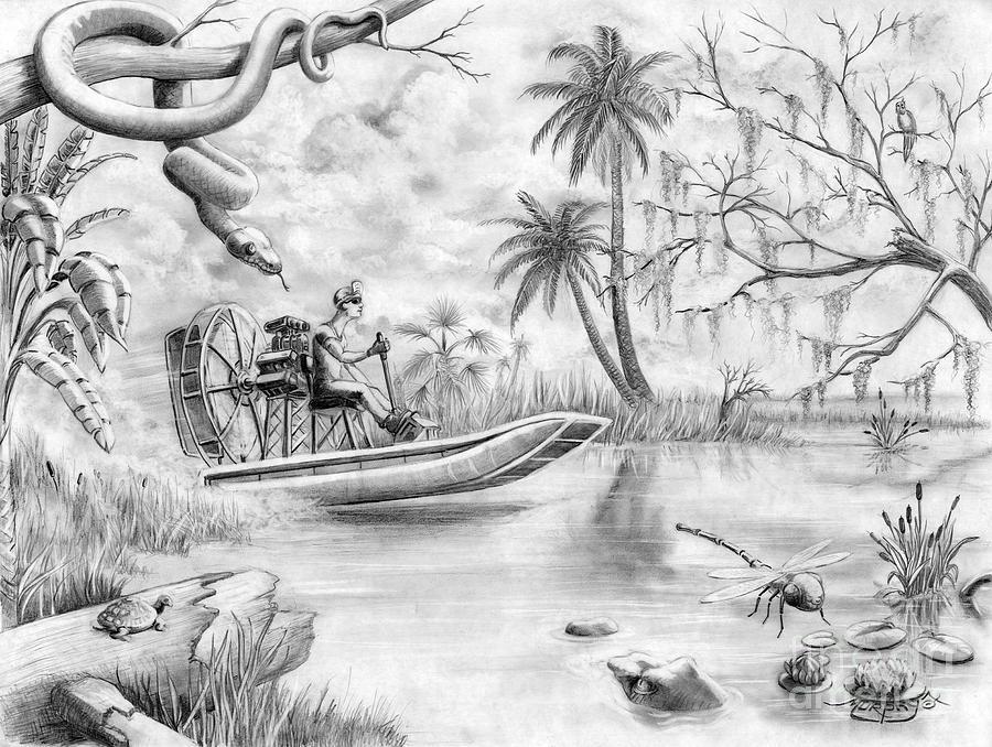 900x678 Everglades Florida Drawing By Murphy Elliott