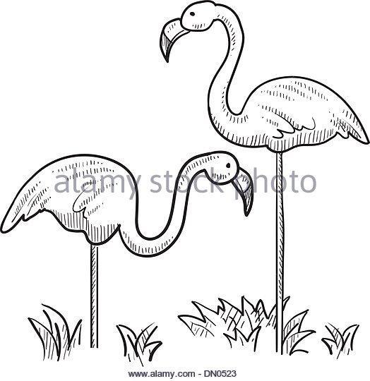 524x540 Miami Beach Florida Flamingo Park Stock Photos Amp Miami Beach