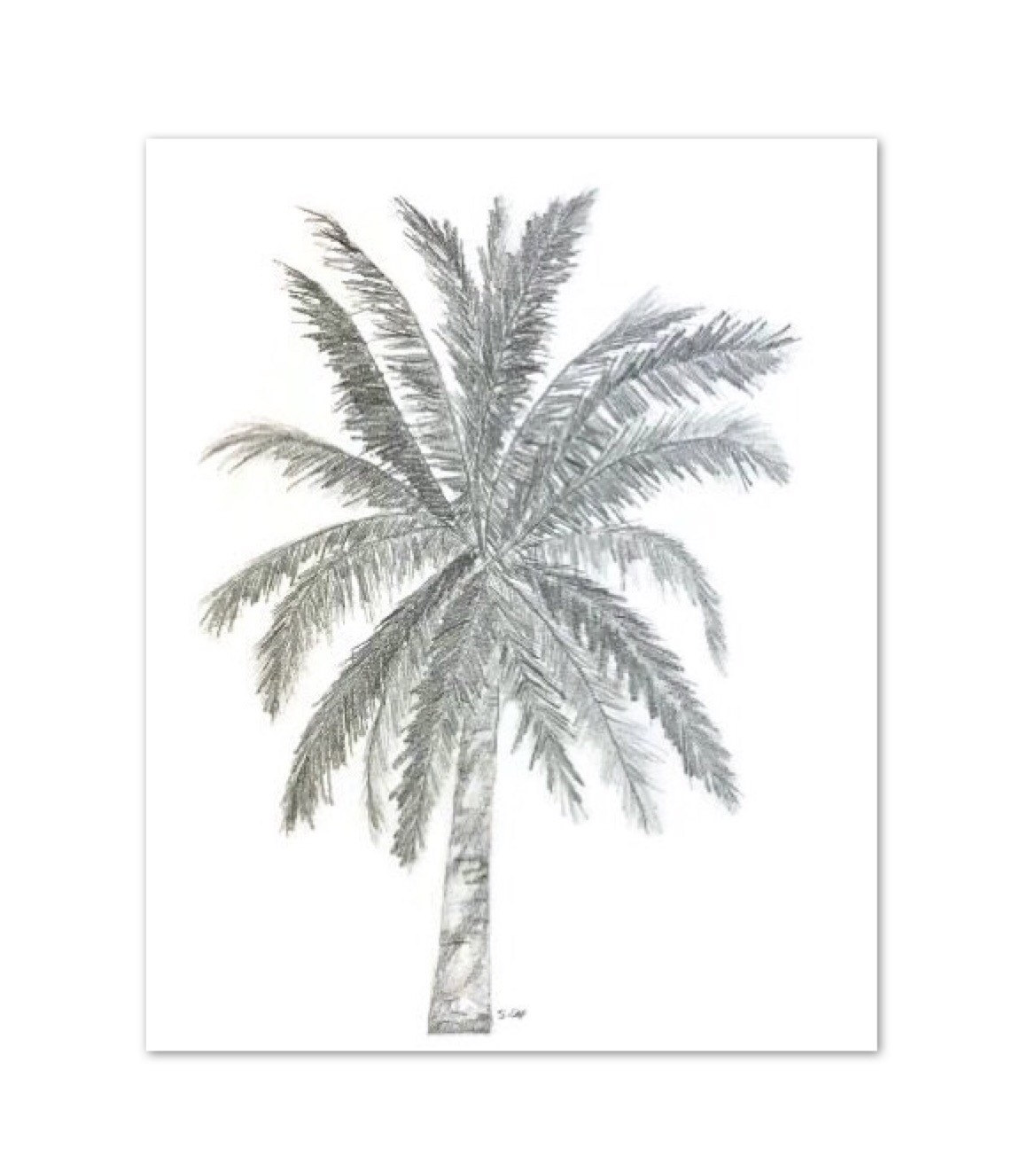 1169x1322 Original Pencil Sketch, Palm Tree Drawing, Palmtree Tropical
