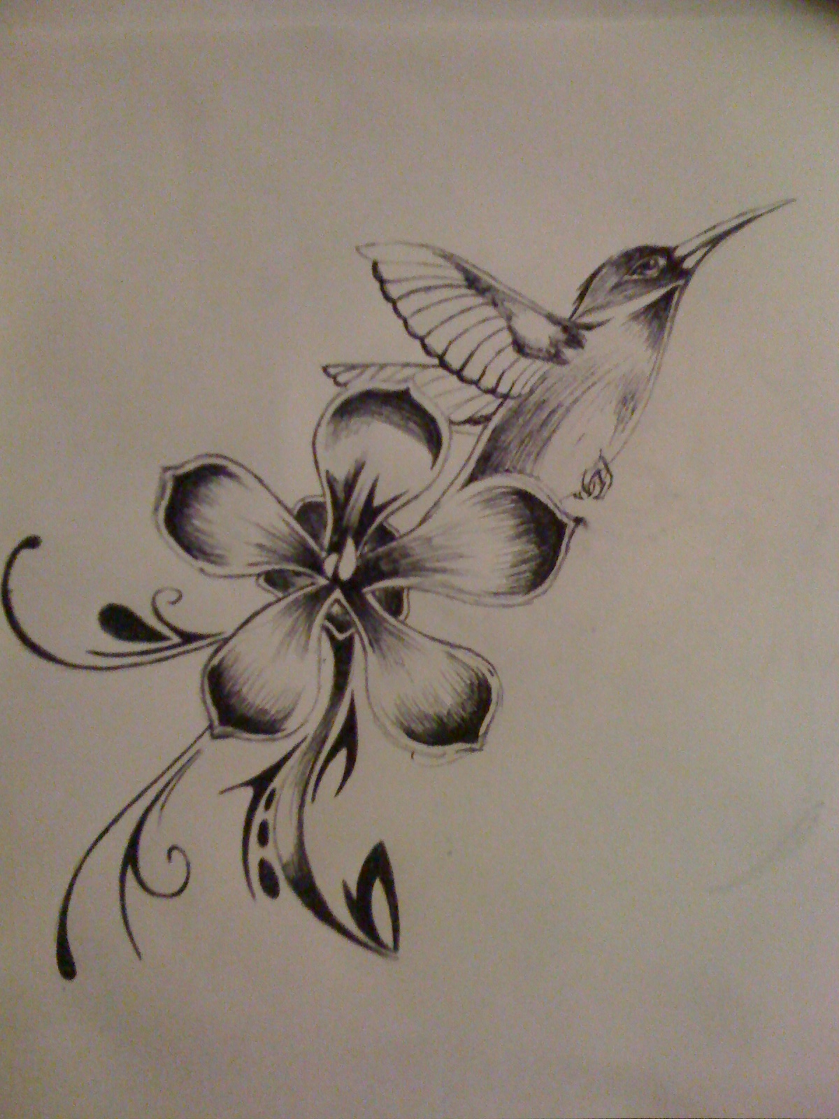 Flower And Bird Drawing
