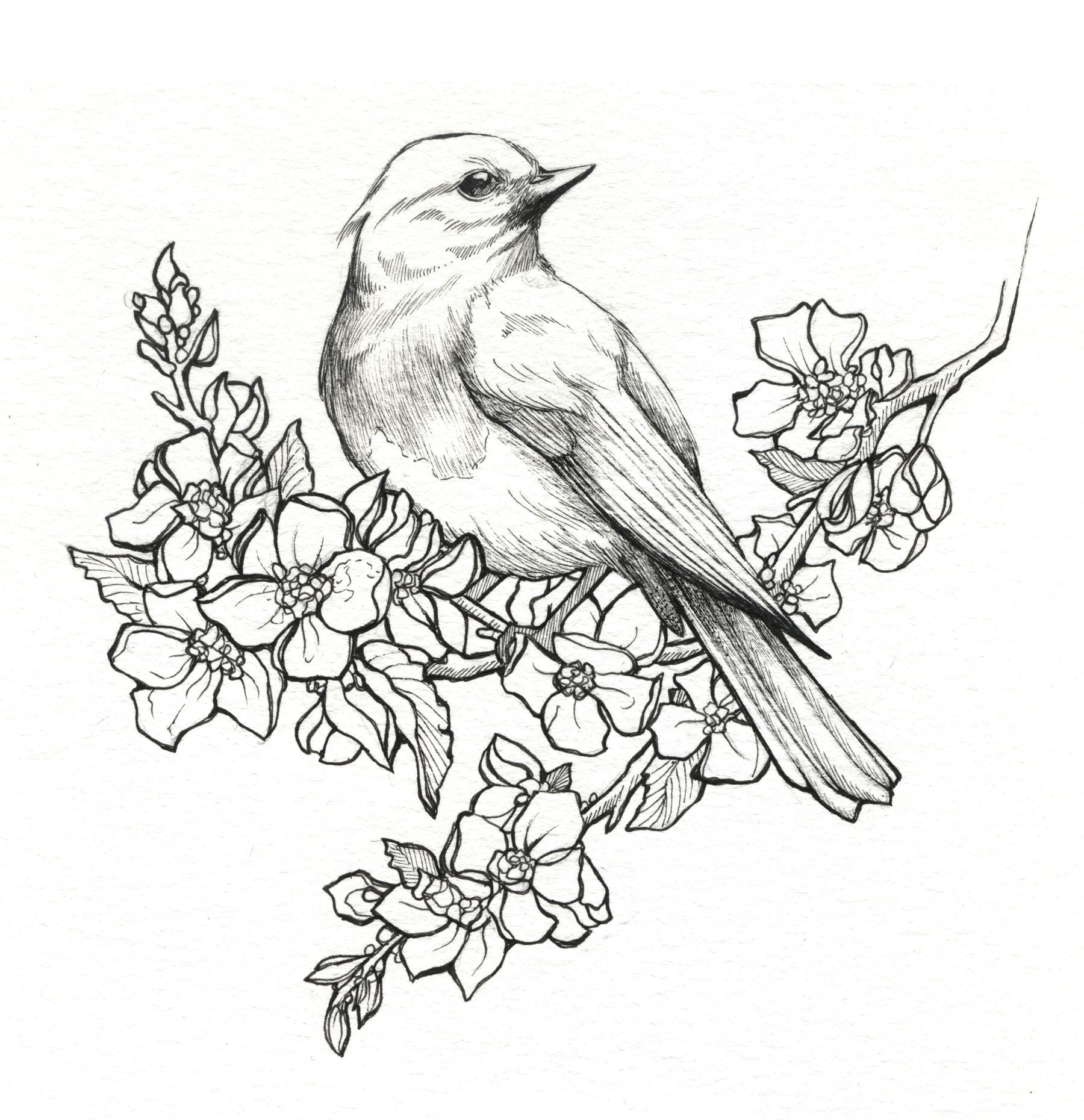 1800x1860 Pictures Drawings Of Flowers And Birds,