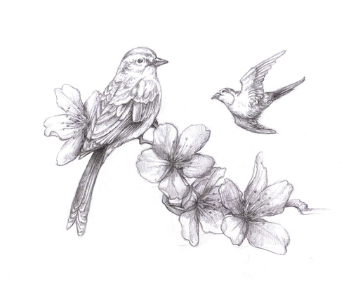 Flower And Bird Drawing At Getdrawings Com Free For