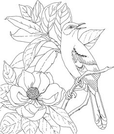 236x276 Virginia Cardinal Coloring Page Purple Kitty Coloring Pages