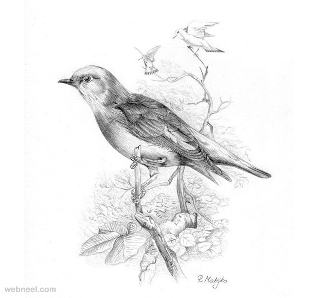 660x613 bird drawings 2