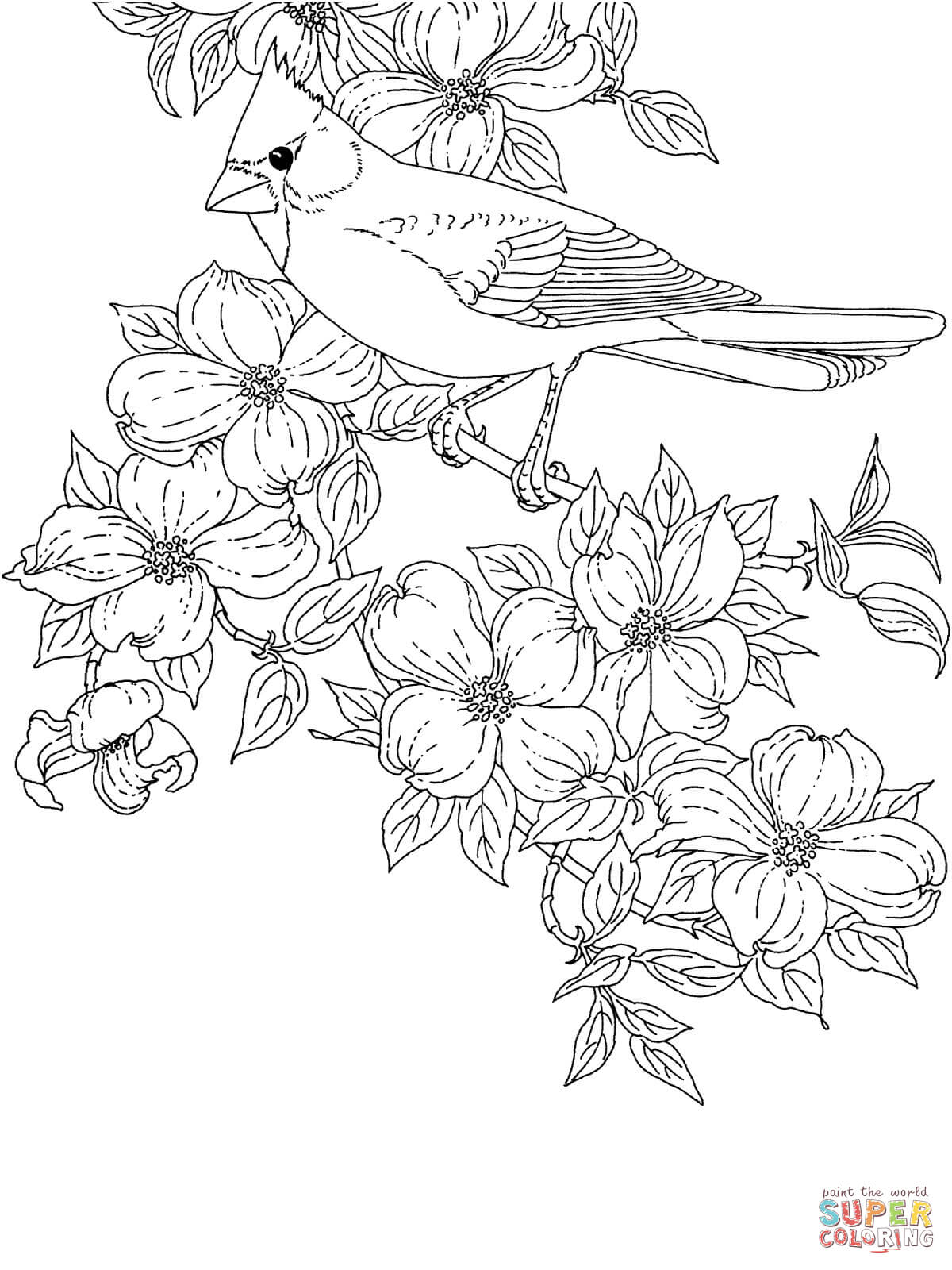 1200x1600 Cardinal Bird And Flowering Virginia State Flower Coloring Page