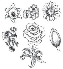 245x269 How To Draw Flowers Drawing Tutorials Amp Drawing Amp How To Draw